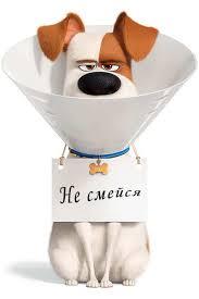 Мультфильм Тайная жизнь домашних животных 2  скачать